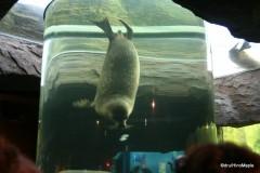 Leopard Seal tank at Asahiyama Zoo