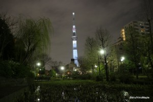 Hanami Sky Tree (White Version)