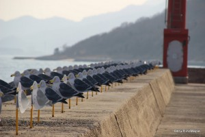 Seagulls Parking Lot by Takahito Kimura (Megijima)