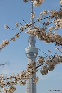 Kinshi Koen Sakura with Tokyo Sky Tree (2013)