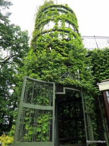 Mysterious Staircase to the Roof