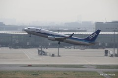 ANA Flight at Haneda Airport