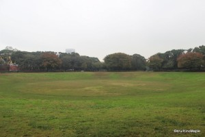Future Dream Island Archery Field; Currently an Open Park or Forested Area