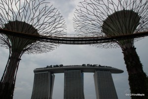 Super Tree Grove & Marina Bay Sands Hotel