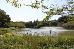 Meijo Park - Main Pond