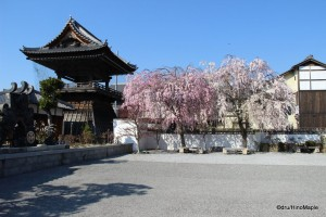 Soaji Bell Tower & Cherry Trees