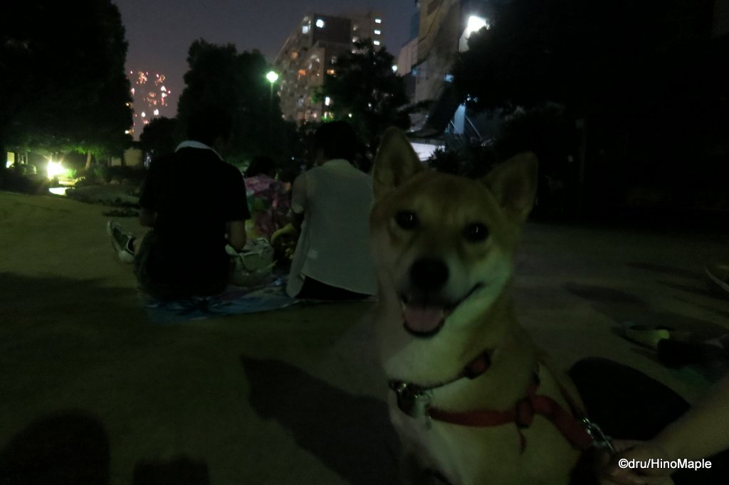 2014 Sumidagawa Fireworks with Sox