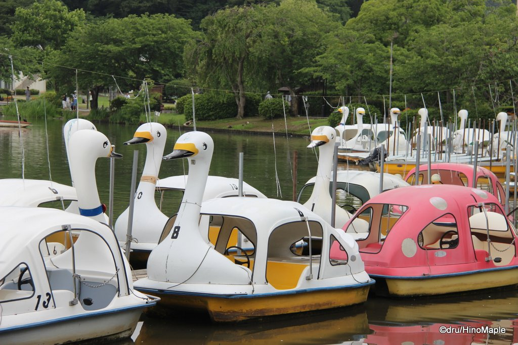 Swan Boats of Lake Senba