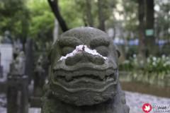 My Favourite Boy at Kumano Shrine