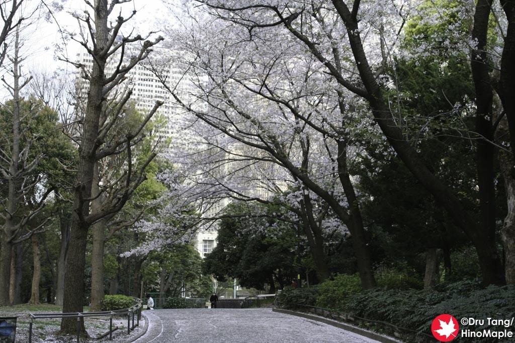 Shinjuku Chuo Koen