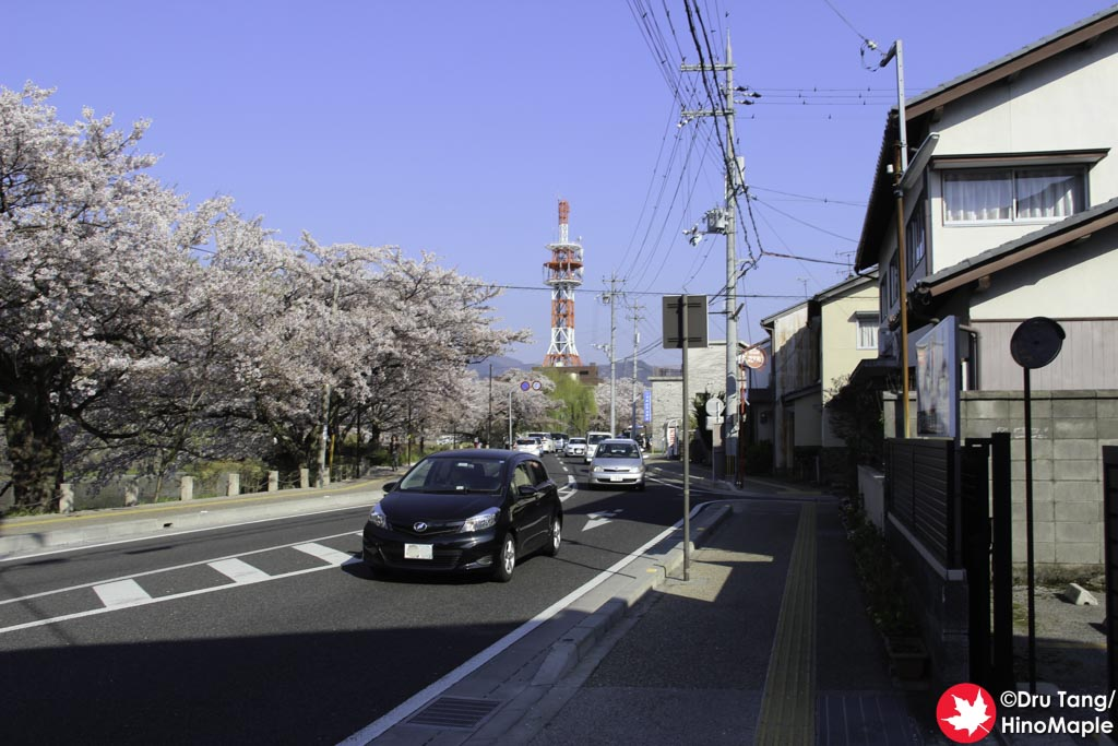 Cars and Sakura in Hikone