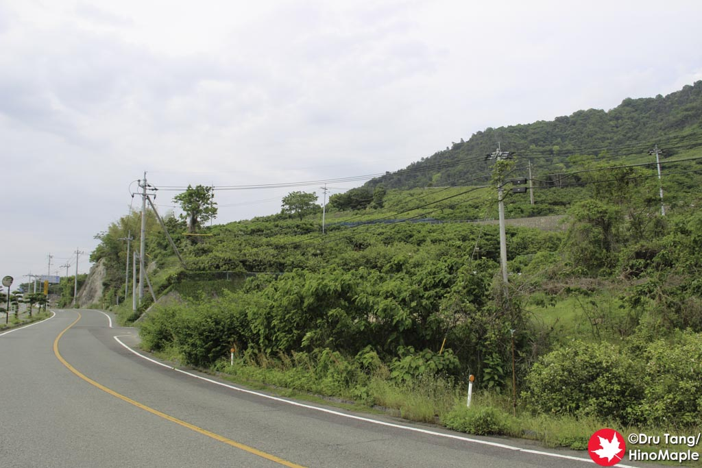 Citrus Fields on Ikuchijima