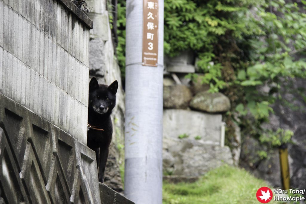 Dog in Onomichi