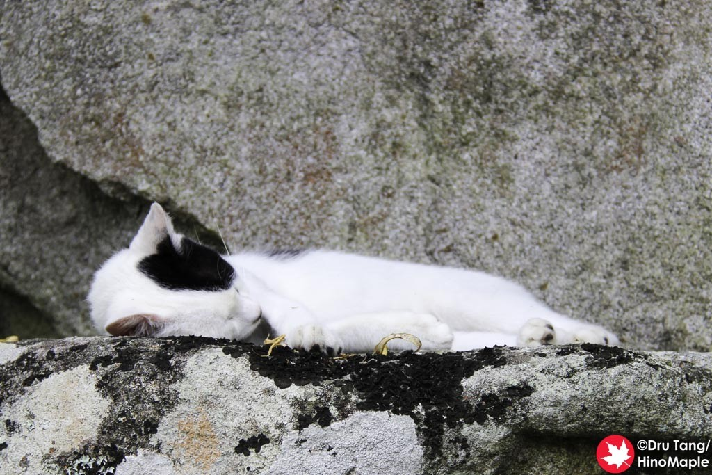 Lazy Cat on a Hot Summer's Day at Naritasan