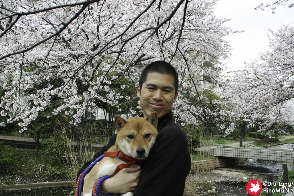 Me and Sox during the 2011 hanami season.