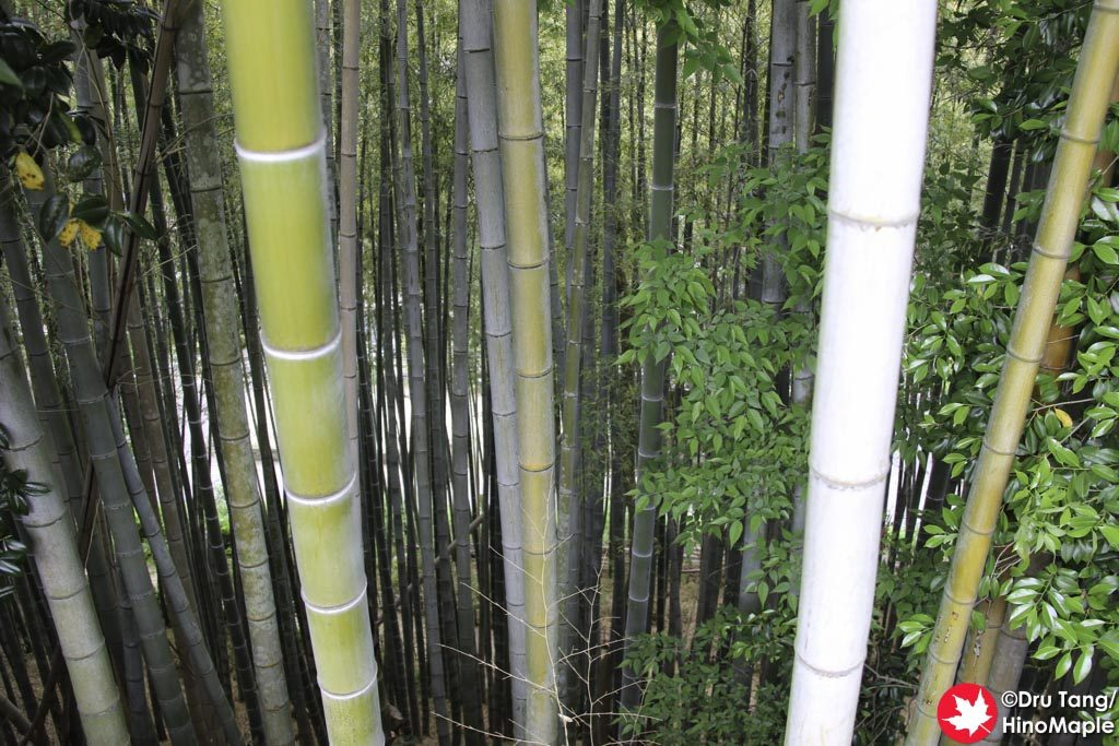 Bamboo Forest behind Daishoin