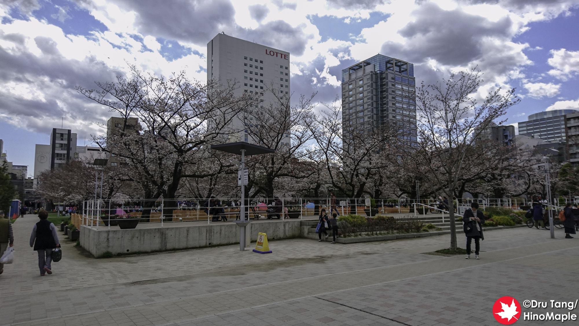 Sankt Gallen - Sakura