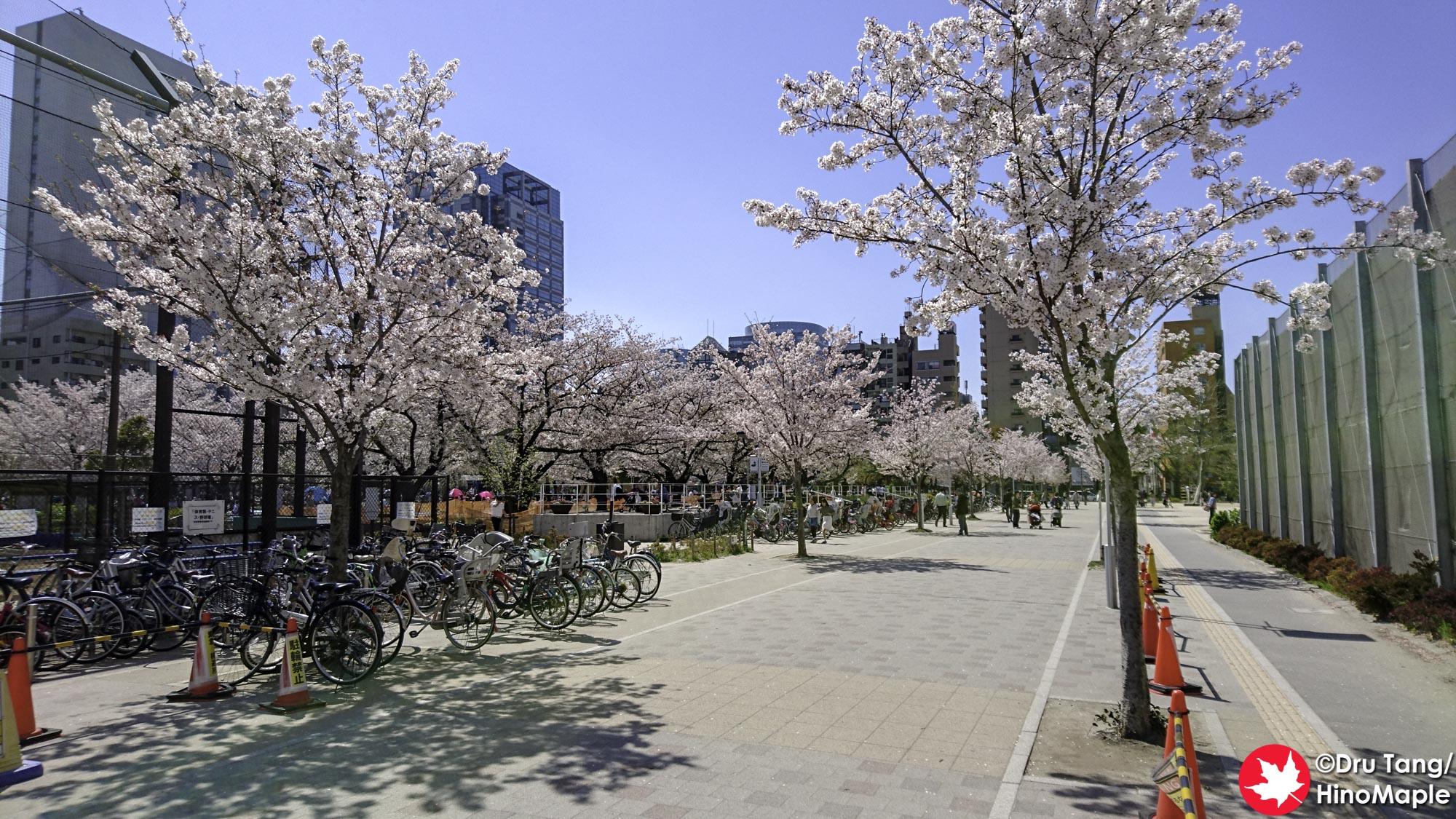 Kinshi Park (Sakura)